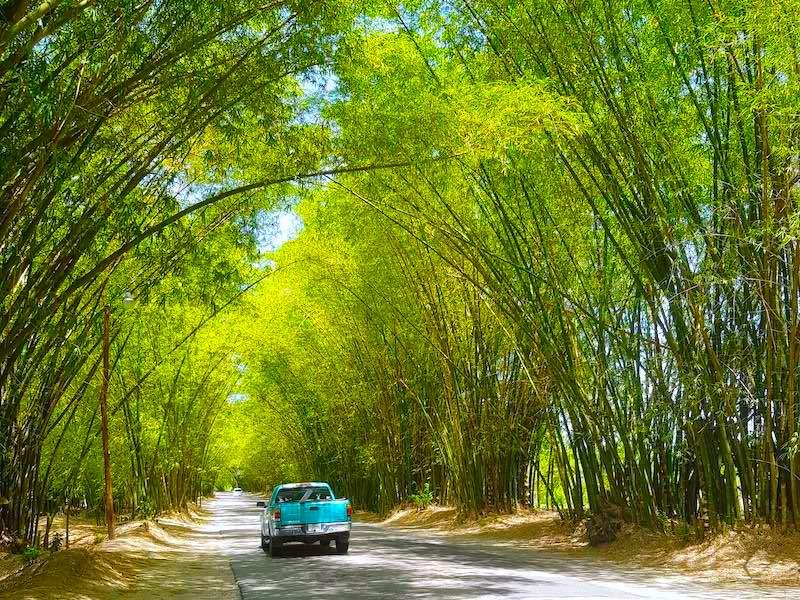 Jamaika Rundreise Bamboo Avenue